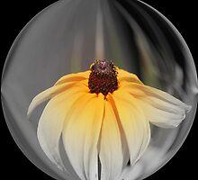 Daisy World: by Cherubtree