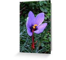 What Flower Am I? Thisis a saffron crocus, solved by RobPixaday and CanDuCreations. Greeting Card