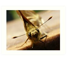 a little moth with big eyes Art Print
