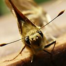 a little moth with big eyes by tego53