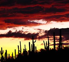 Desert Sunset  by Conor Quinlan