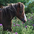 Horse with Flowering Thistles by Photodx
