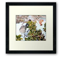 Mockingbird and Holly Framed Print