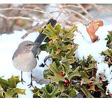 Mockingbird and Holly Photographic Print