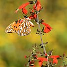 Gulf Fritillary on Red Snapdragon by Lisa G. Putman