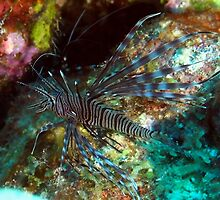 Lion Fish on the Reef by Amy McDaniel