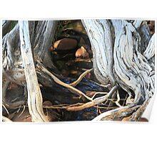 Tea Tree Stream Poster