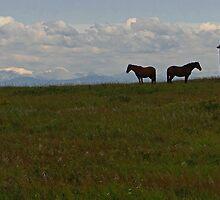 Alberta Panorama - God's Country by Al Bourassa