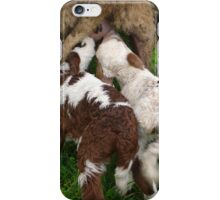 Twin Lambs Suckling From Their Mother iPhone Case/Skin