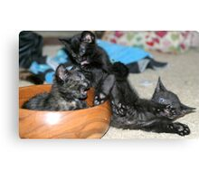 Kitty Bloopers:  Battle Of The Bowl Canvas Print