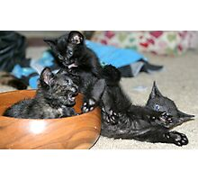 Kitty Bloopers:  Battle Of The Bowl Photographic Print