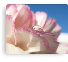Carnation Drops IV Canvas Print