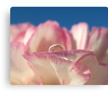 Carnation Drops V Canvas Print