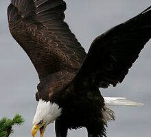 Fly with the Eagles by Martin Smart