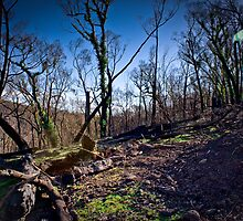Regrowth by Chris Culhane