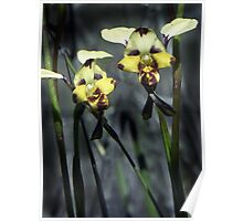 Australian Native Orchids - Little Desert Area, Western Victoria Poster