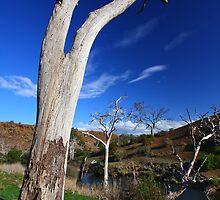 Rural Melton 2 by David  Hibberd