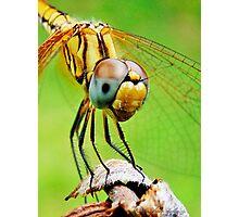 Dragon macro Photographic Print