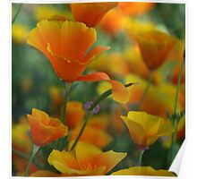 Orange painting Poster