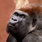 Gorilla by Rosemaree