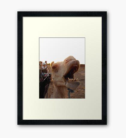 An Unhappy Camel Framed Print