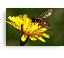 Wasp Canvas Print