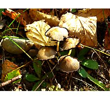 Fungi Function Photographic Print