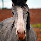 Grey Filly by Ruth Anne  Stevens