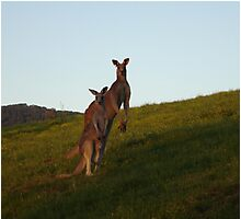Roo Family Photographic Print