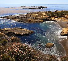 Sea Lion Point, Point Lobos State National Reserve by JMDunworth