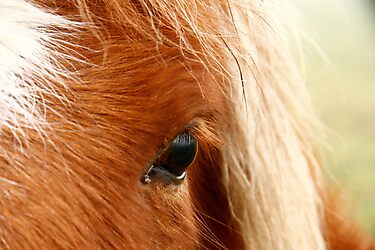 Horse Eye #2 by Per Bjarne Pedersen