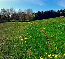 Green grass, flowers and blue sky | landscape photography by Patrick Jobst