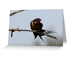 Barn Swallow Stretching Greeting Card