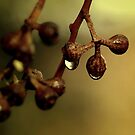 ~And The Rain Fell Down~ by a~m .
