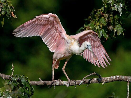 Cajun Flamingo by Bonnie T.  Barry
