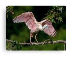 Cajun Flamingo Canvas Print