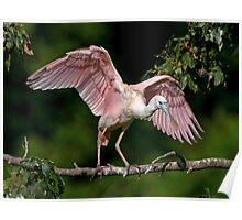Cajun Flamingo Poster