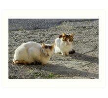 Basking cats Art Print