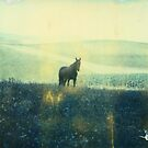 Wild Black Horse by MoiMM
