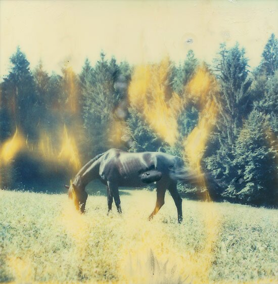 Wild Black Horse 2 by MoiMM