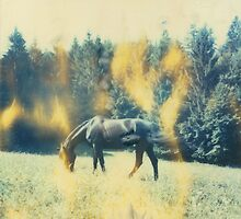 Wild Black Horse 2 by MoiMM