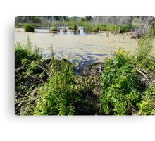 Draining the Beaver Pond Canvas Print