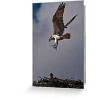 Osprey landing on Nest Greeting Card