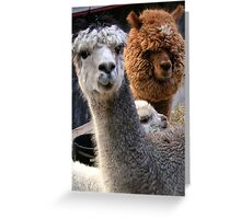 Two Alpacas and oooh a little baby Greeting Card