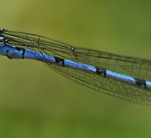 Damsel out of distress by Chris Wood