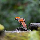 Perched by shutterjunkie