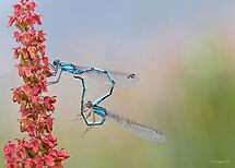 Damsels in Love by Sarah-fiona Helme