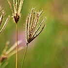 grass by sunith shyam
