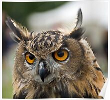 Young Eagle Owl Poster