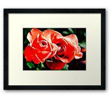 Apricots Roses Framed Print